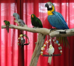 macaw stands