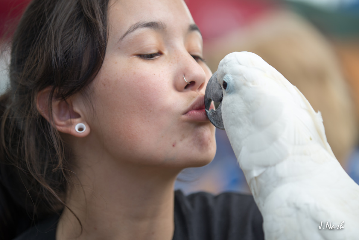 Cockatoo Kisses