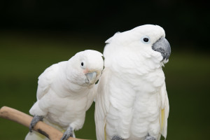 Monthly Club Meeting and Pot Luck @ Hawaiian Feathered Friends Network